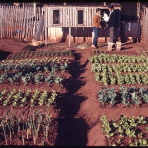 Photograph of a 4-C garden and rabbit hutches  in Cheiro-Cue.